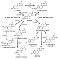 Estradiol metabolism.png