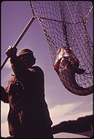 FISHING FOR TRUE COD IN SOUTHERN PUGET SOUND NEAR POINT DEFIANCE. THESE BOTTOM FISH ARE AN EXCELLENT FOOD FISH AND... - NARA - 552321.jpg