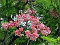 FLOWERS 4 (7169988193).jpg