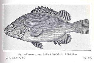 Hephaestus (fish) Genus of fishes