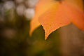 Fall Bokeh (4011049171).jpg