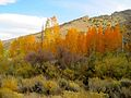 Fall Color Wilson Canyon (19791142120).jpg