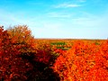 Fall Foliage from on Top of Timms Hill - panoramio.jpg