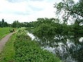 Fallen tree nearly blocks the river Lark - geograph.org.uk - 1309798.jpg