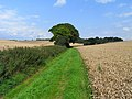 Farmland, Collingbourne Kingston - geograph.org.uk - 1561737.jpg