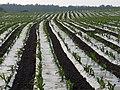 Farmland, Kincardine-in-Menteith - geograph.org.uk - 183831.jpg