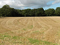 Farmland, west of Great Park Wood - geograph.org.uk - 230201.jpg
