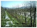 February Spring Homefleet-Cigogne arrived Southern Germany HABITAT - Magic Rhine Valley Photography 2013 - panoramio (7).jpg