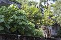 Felis silvestris catus (36358335954).jpg