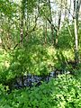 Feuchtgebiet - Wälder im Donautal.jpg