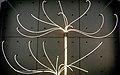 Fiber optics (3090383496).jpg
