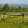 Field + Fence (2683931651).jpg