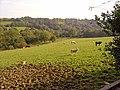 Field with sheep and cattle, Bribwll, Llanfyrnach - geograph.org.uk - 982418.jpg
