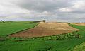 Fields, Ceyhan - Adana 01.jpg