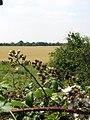 Fields beside The Street - geograph.org.uk - 895502.jpg