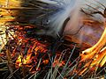 Fire and smoke in hey.jpg