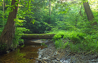 Tionesta Scenic and Research Natural Areas