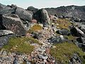 Flickr - brewbooks - Black Lichen^ below Echo Rock.jpg