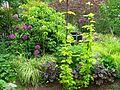 """Flickr - brewbooks - Little back """"room"""" on our garden (1).jpg"""