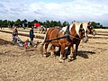 Flintham Ploughing Match, Newton - geograph.org.uk - 570963.jpg