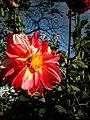 Flor. rosada.jpg