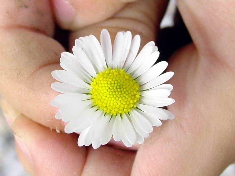 Flor 00eue