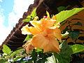 Flor de Peribeca.JPG