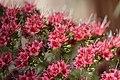 Flower (28124025148).jpg