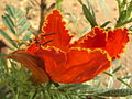 Flower 42.JPG