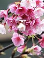 Flower Lover (16373773447).jpg