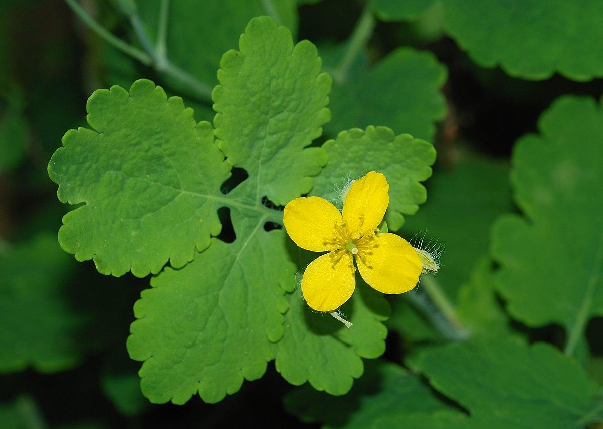 Flower October 2008-1.jpg
