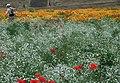 Flower beds at the Kokai river - panoramio.jpg
