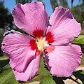 Flower in Gagarina park.jpg