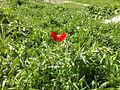 Flower maryak.jpg