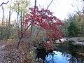Flowering Dogwood (30891442646).jpg