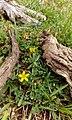 Flowers&Roots.jpg