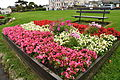 Flowers at Babbacombe Downs (6960).jpg
