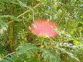 Flowers of Cuba -Laslovarga (4).JPG