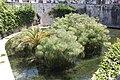 Fonte Aretusa SIracusa saro di bartolo-01.jpg