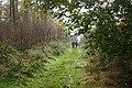 Footpath through Snever Wood, near Wass (N Yorks) - geograph.org.uk - 73873.jpg