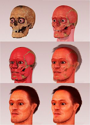 Forensic facial reconstruction - Forensic facial reconstruction of Alberto di Trento by Arc-Team and the 3D artist Cicero Moraes