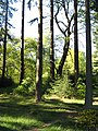 Forest, Killiecrankie - geograph.org.uk - 829802.jpg
