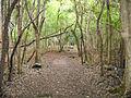 Forest (4823362645).jpg