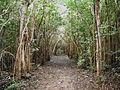 Forest (4823976038).jpg