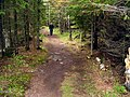 Forest Path - panoramio.jpg