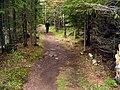 Forest Path - panoramio.jpg