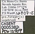 Formica neogagates casent0005382 label 1.jpg