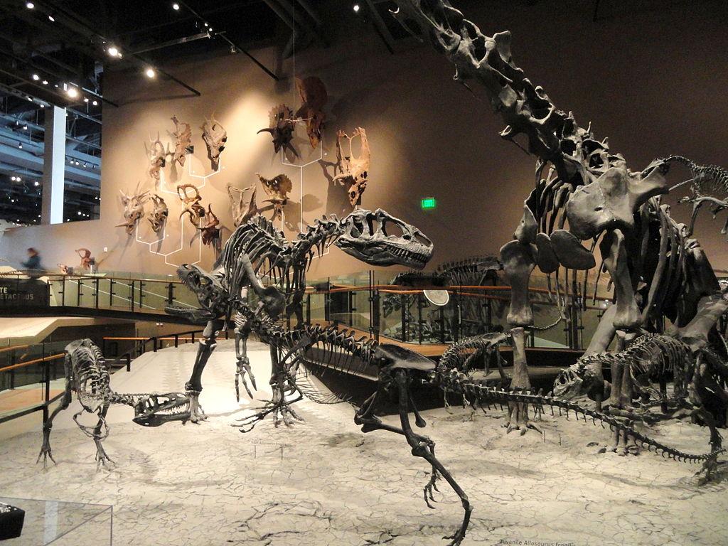 Allosaure fossile