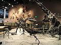 Fossil displays - Natural History Museum of Utah - DSC07215.JPG