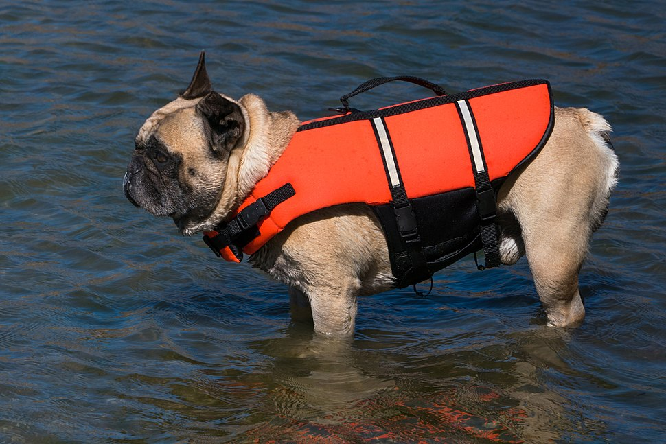 french bulldog jacket personal flotation device howling pixel 7796